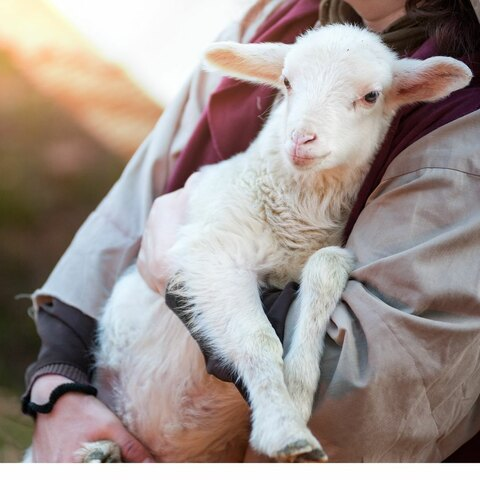 Shepherd carrying their child close to their heart