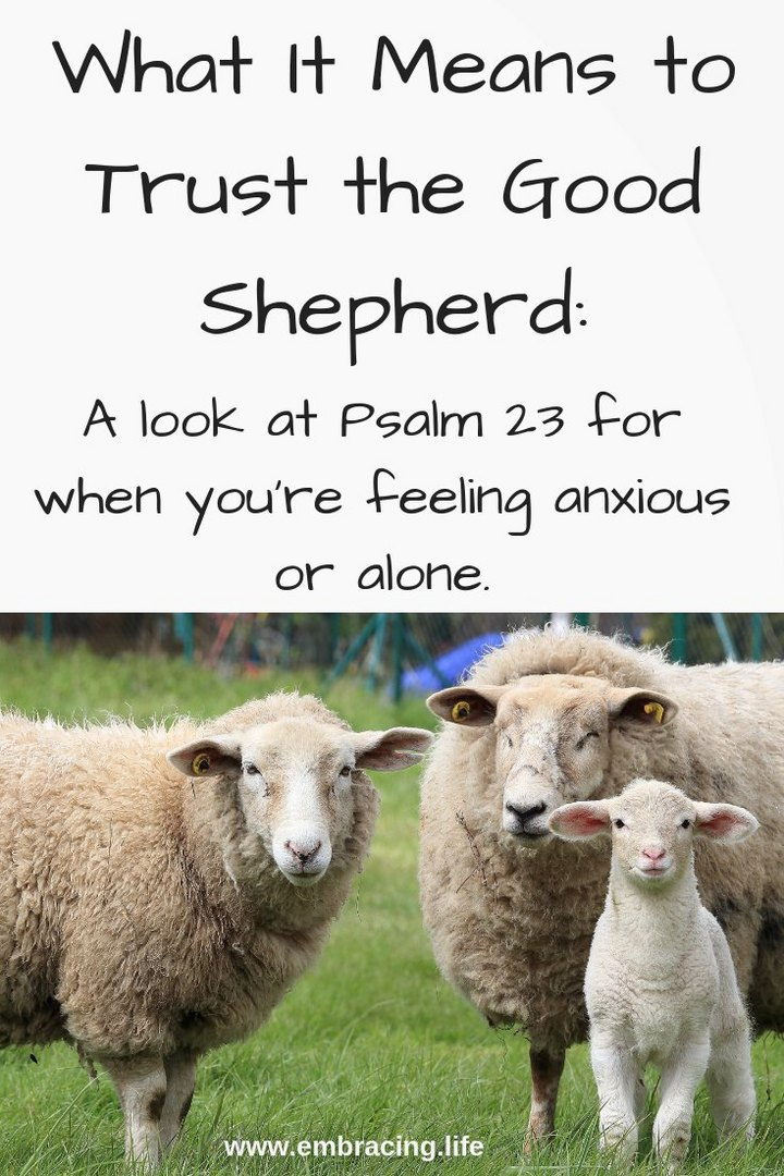 What It Means to Trust The Good Shepherd